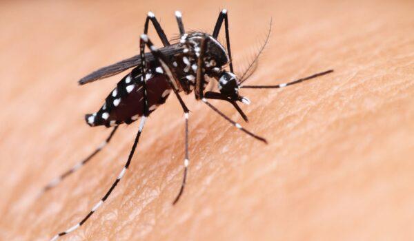 Zasad nema opasnosti od nove najezde komaraca