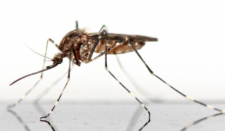 Osijek: kreće borba protiv komaraca!